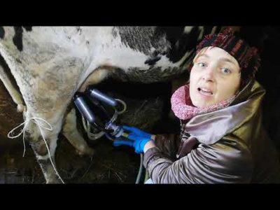 як правильно доїти корову
